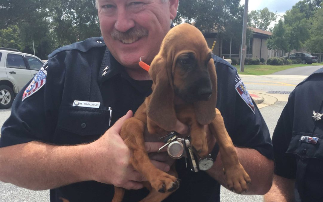 Southern Edge K9's bloodhound joins Statesboro Police Department